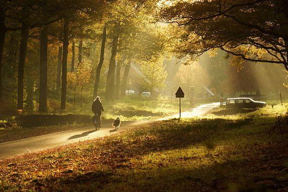 Nederland - Veluwe