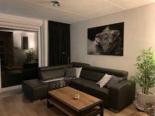 Kundenfoto: Junger Löwe in schwarz-weiß von Jeroen Stel, auf leinwand