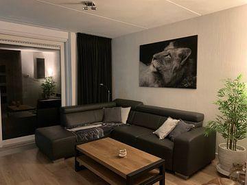 Kundenfoto: Junger Löwe in schwarz-weiß von Jeroen Stel