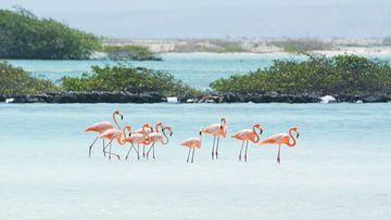 Een familie Flamingo's van Michel Geluk