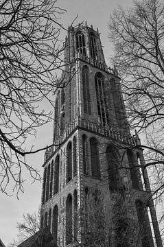 levez les yeux vers la tour Dom