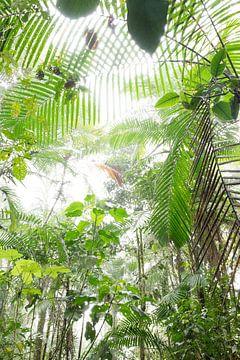 Wolkenwald Mindo, Ecuador von Hanneke Bantje