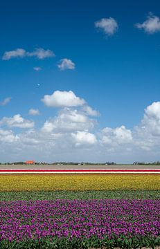 Tulpen landschap von Menno Schaefer
