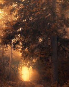 Touched by magic van Thomas Jansen