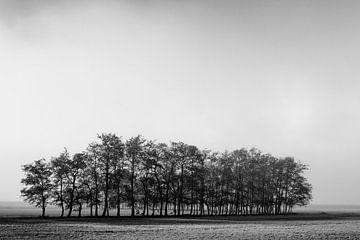 Une rangée d'arbres solitaires