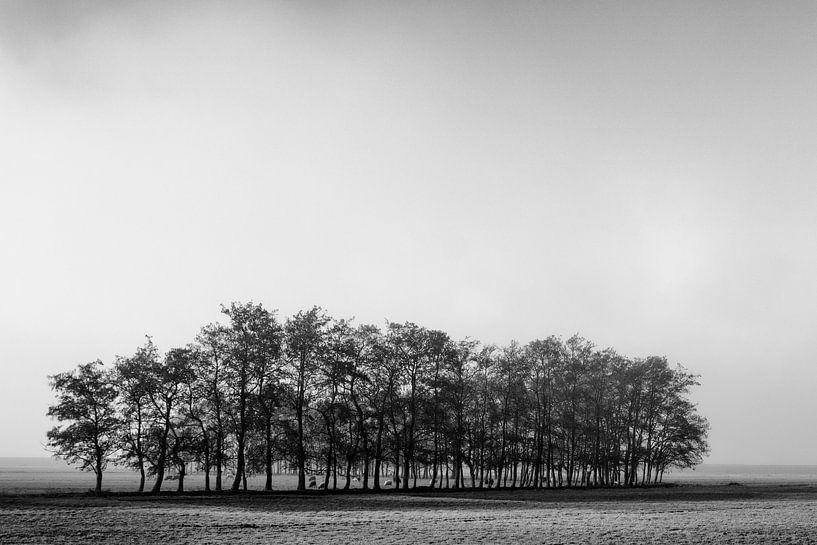 Eenzame rij bomen van Ton de Koning