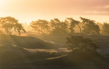 Zonsopkomst tijdens mist op Hulshorsterzand van Dennis Mulder