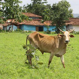 Koe in Indiaas landschap van Cora Unk