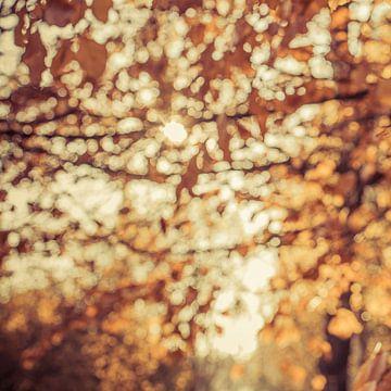 Herfstblaadjes in November von