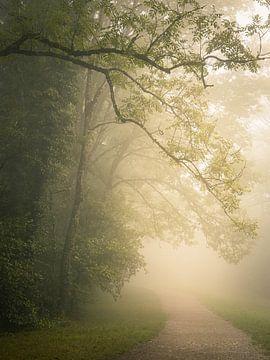 Mist in het park van Mojca Osojnik