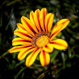 Yellow Flower van Rob van der Teen