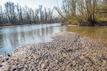 Droogvallend land in een Nederlands natuurgebied van Ruud Morijn