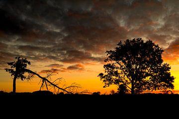 Bäume_01 von Johan Honders