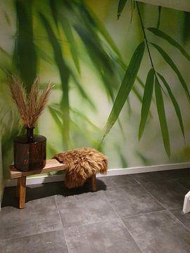 Kundenfoto: Bambus von Birgitte Bergman