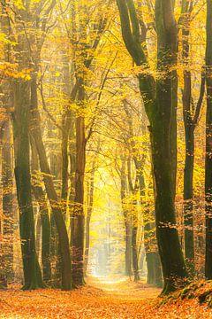 Pfad durch einen goldfarbenen Herbstwald an einem schönen, sonnigen Herbsttag.