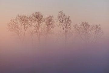 Kunstachtige Mysterieuze Bomen verborgen in Roze Mist van Susanne Ottenheym