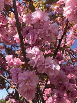 Blühender Baum von Laura Basso