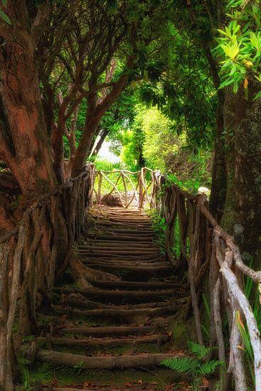 Rustic stairs van Thomas Herzog