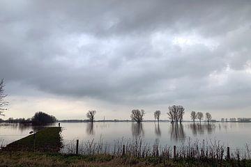 Landschap met bomen in het overgelopen weiland van Edith Wijte