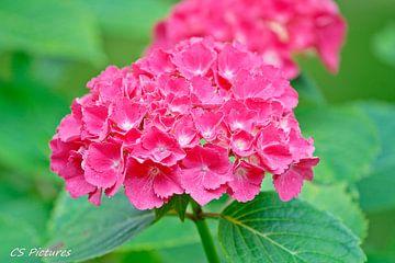 Blume in Pink van Christina Sudbrock