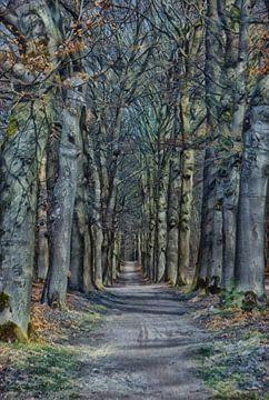 Ein stilisierter Waldweg. von Jurjen Jan Snikkenburg