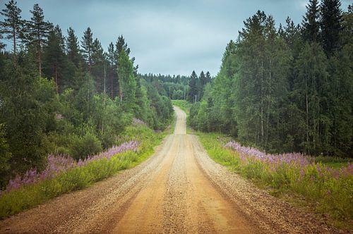 Dennenbomen langs onverharde weg in Finland