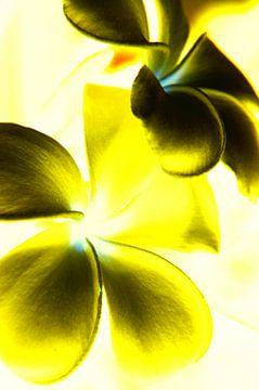 Contraste des fleurs (jaune)