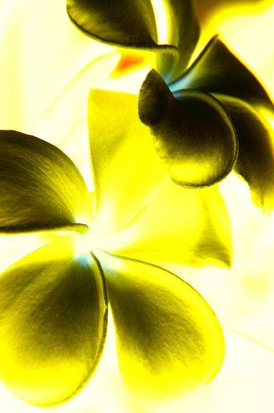 Bloemen Contrast (geel)