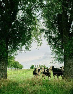Kühe von Wouter Bos