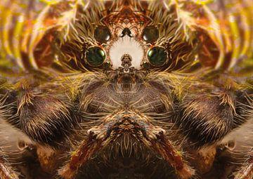 Een spin kwam langs van Andreas Schulte