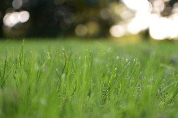 Gras von Anouk IJpelaar