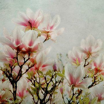 Magnolien von Claudia Moeckel