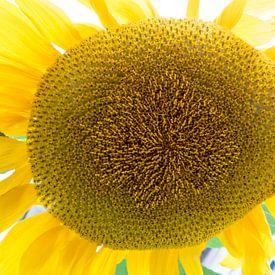 Autumn with sunflower sur Roelof Foppen