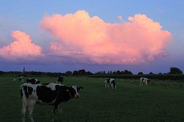Koeien bij zonsondergang van Berlinda Kers