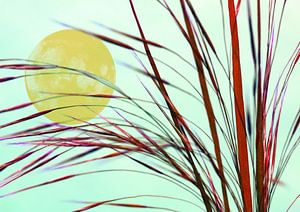 Mond hinter dem Gras