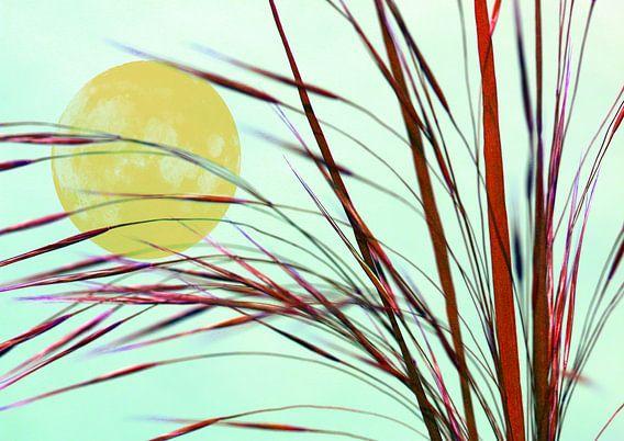 Mond hinter dem Gras van Rosi Lorz