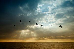 Vliegen als een zeemeeuw van Esther Hereijgers