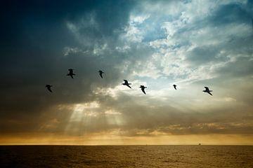 Fliegen wie eine Möwe von Esther Hereijgers