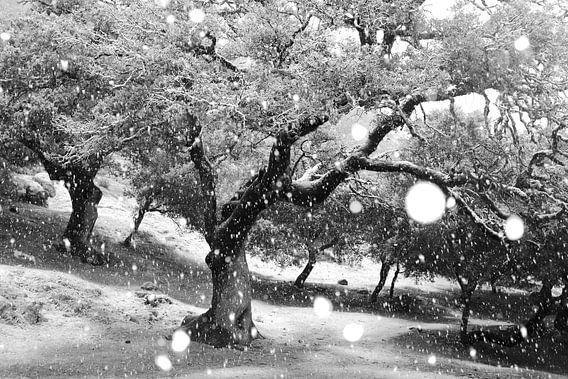 Snowing van Andres Miguel Dominguez