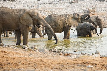 Olifanten waterprettereter van