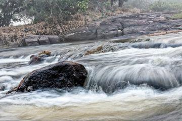 Parc Isadou Suriname sur Michel Groen