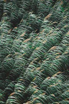 Hohes dunkles Gras von Wahid Fayumzadah