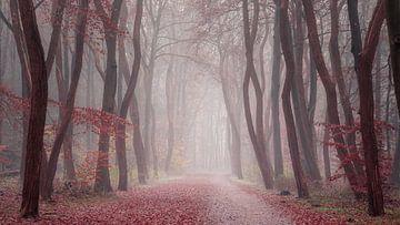 De laatste bladeren... van gooifotograaf