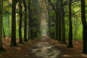Schöne Farben im Wald nach einer Nacht mit Regen von Sabina Meerman