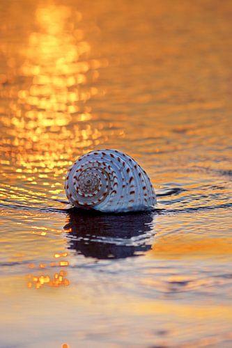 schelp op het strand in de avondzon weerkaatsend licht op het water van