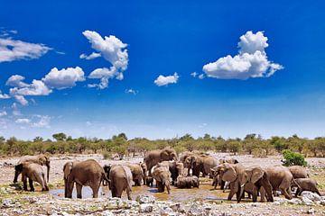 Elefantenparadies, Namibia wildlife von W. Woyke