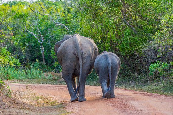 Olifanten in Yala National Park, Sri Lanka