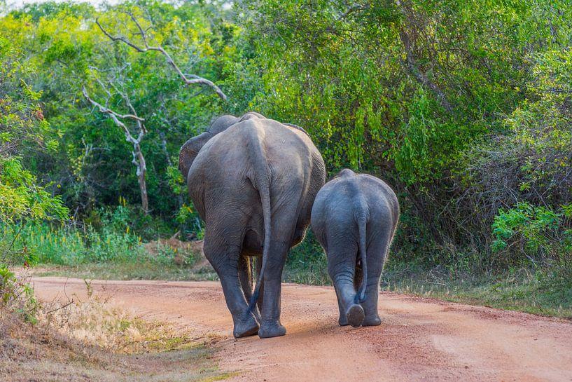 Olifanten in Yala National Park, Sri Lanka van Lifelicious