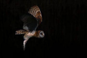 Fliegende Schleiereule. von Albert Beukhof
