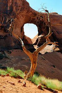 Juniper Tree sur